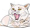 쇼트 헤어 고양이 야옹 소리를 지르는 | Stock Vector Graphics