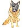 ID 3236283 | Deutscher Schäferhund | Stock Vektorgrafik | CLIPARTO