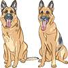 Pies rasy owczarek niemiecki | Stock Vector Graphics