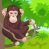 Zabawna szympans małpa w dżungli | Stock Vector Graphics