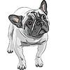 skizzieren Haushund Französisch Bulldog Rasse