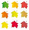 Kolekcja kolorowych liści klonu projekt | Stock Vector Graphics