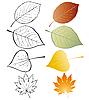 Conjunto de hojas | Ilustración vectorial