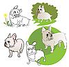 Fünf Französische Bulldogge
