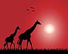 Векторный клипарт: Жирафы
