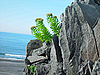 ID 3054509 | Kurilen-Inseln | Foto mit hoher Auflösung | CLIPARTO