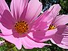 ID 3054624 | Sanfte rosa Blumen | Foto mit hoher Auflösung | CLIPARTO