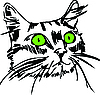 Mündung einer Katze mit grünen Augen