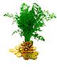Eneldo y monedas | Foto de stock