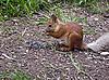 ID 3062821 | Eichhörnchen auf dem Boden | Foto mit hoher Auflösung | CLIPARTO