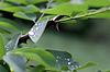 ID 3381514 | Капля воды на зеленых листьев после дождя | Фото большого размера | CLIPARTO