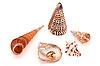 ID 3067293 | Pierścionek z perłą i muszli | Foto stockowe wysokiej rozdzielczości | KLIPARTO