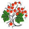 Strauß roter Johannisbeere. Reife Beeren