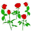 设置的红玫瑰 | 向量插图