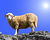 ID 3101305 | Schaf am Felsen | Foto mit hoher Auflösung | CLIPARTO