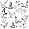 Set von weißen Tauben