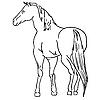 schwarzweißes Pferd