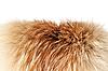 ID 3087809 | Fox winter fur | Foto stockowe wysokiej rozdzielczości | KLIPARTO