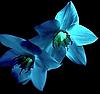 Синие цветы | Фото