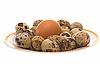 ID 3080457 | Eier | Foto mit hoher Auflösung | CLIPARTO