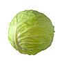 卷心菜 | 免版税照片