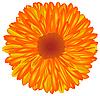 橙黄色的花 | 向量插图
