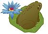 Frosch auf einem Lotusblatt