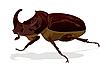 Носорог жук