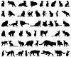 Set von Silhouetten der Katzen