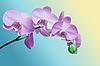 Orchidee-Blumen | Stock Foto