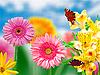 Kwiaty Gerbera z motylami | Stock Foto