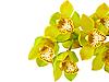 Kwiat orchidei | Stock Foto