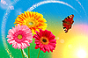 Gerbera kwiaty i motyl | Stock Foto