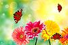 Gerbera-Blumen mit Schmetterlingen | Stock Foto
