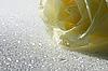 Желтая роза | Фото
