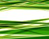 Зеленые линии | Иллюстрация