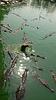 ID 3350144 | Krokodile | Foto mit hoher Auflösung | CLIPARTO