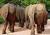 ID 3106133 | Słonie | Foto stockowe wysokiej rozdzielczości | KLIPARTO