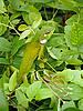 ID 3115788 | Variable Lizard | Foto stockowe wysokiej rozdzielczości | KLIPARTO