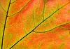 ID 3089253 | 在阳光下泛着秋叶 | 高分辨率照片 | CLIPARTO