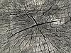 ID 3089280 | Текстура старой древесины | Фото большого размера | CLIPARTO