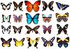 Verschiedene Schmetterlinge | Stock Foto