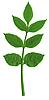 Grüne Blätter | Stock Foto