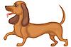 Hund Dackel