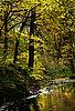 Herbst im Wald | Stock Foto