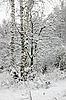 Bäume im Schnee | Stock Foto