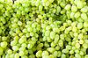 ID 3092980 | Zielone winogrona | Foto stockowe wysokiej rozdzielczości | KLIPARTO