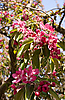 ID 3105767 | Kirschblüten | Foto mit hoher Auflösung | CLIPARTO