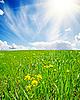 Wiosna łąka z kwiatami | Stock Foto
