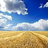 ID 3091260 | Ernte in Schwaden unter bewölktem Himmel | Foto mit hoher Auflösung | CLIPARTO